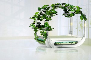 ecotypic-bed